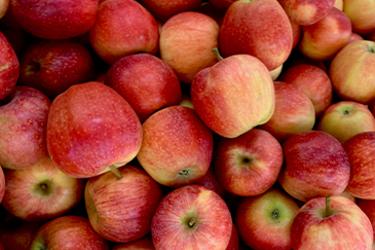 overzichtfoto-appel.png